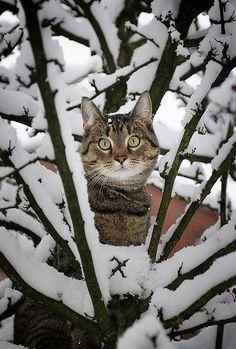 ♔ snow cat
