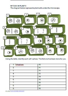 "The ""Must Do"" Mitosis Activity Package (Cell Cycle/Mitosis)"