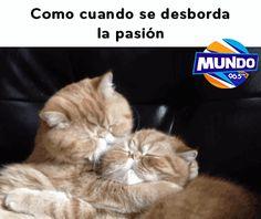 Cuando la pasión... - GifsGamers.com || La mejor web hispana sobre gifs