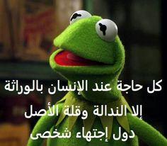 اجتهاد شخصى والله هههههه Arabic Memes, Arabic Funny, Arabic Love Quotes, Funny Frogs, Funny Qoutes, Kermit The Frog, Funny Times, Morning Humor, Green Man