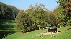 Roggenhausen Wildlife Park in Aarau Alpine Coaster, Interactive Museum, Ropes Course, Wildlife Park, Family Activities, Switzerland, Golf Courses, Trail, Swimming