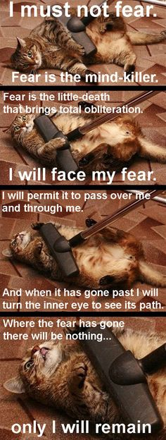 I Will Face My Fear