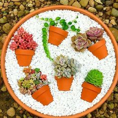 More Than 15 Deco Trend Small Colorful Diy Succulent Flower Garden Pot In ; Deco trend: Small colorful DIY succulent flower garden pot in pot Succulent Gardening, Succulent Pots, Planting Succulents, Container Gardening, Organic Gardening, Planting Flowers, Succulent Ideas, Potted Flowers, Gardening Tips