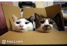 What a beauty! #kitten #purr #cats #cuties
