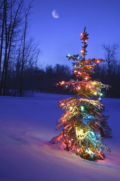 Christmas Tree Outdoors Under Moonlight by Carson Ganci