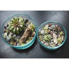 Check out my latest blog post discussing what kind of system is right for you and your space at:  littleglassworlds.com  #terrarium #terrariums #succulent #succulents #succulove #succulentlove #opensystem #plants #garden #tillthesill #driftwood #rocks #moss #hensandchicks #texture #plant #windowsillgarden #diy #craft