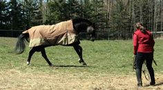 42 Ways to Play, Learn, & Grow with Your Horse