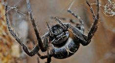 Hasznosak vagy nem a kertben található pókok? Best Pest Control, Pest Control Services, Fun Facts About Animals, Animal Facts, Spider Dream Meaning, Roach Control, Killing Fleas, Bee Removal, Bed Bugs Treatment