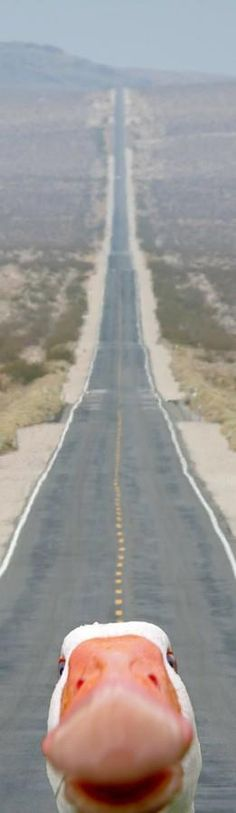 The long and winding road... LOL