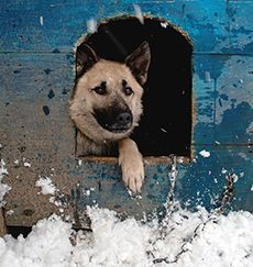 Winter Weather Advisory: Keep Animals Safe and Warm This Winter | Animal Legal Defense Fund