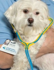 Sadie is a little dog with a big job! She makes people feel better. Sadie is a therapy dog. She comes to the hospitals at Lehigh Valley Health Network and puts smiles on faces.