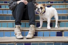 awesome lace-up booties. bonus: cute bulldog puppy