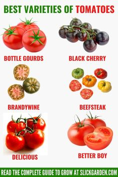 BEST VARIETIES OF TOMATOES. The summertime is best for growing tomatoes. Before growing tomatoes, you should do some research about the varieties. This will help to boost the yield of tomatoes this year. Here are some varieties which you like to grow in your home garden or indoors. Varieties Of Tomatoes, Grow Tomatoes, Kitchen Gardening, Starting A Vegetable Garden, Beef Steak, Summer Garden, Growing Vegetables, Summertime, Gardens