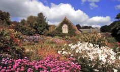 Flowers in bloom at Lanhydrock gardens. http://www.secretearth.com/attractions/1711-cornwalls-gardens