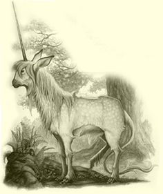 The Spiderwick Chronicles - Tony DiTerlizzi, Holly Black Weird Creatures, Magical Creatures, Fantasy Creatures, Unicorn Art, Magical Unicorn, Fantasy Forest, Fantasy Art, Dragons, Wicca