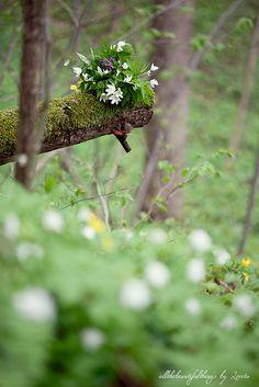 Wild Anemones | par loretoidas