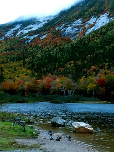 White Mountain National Forest, NH.  The rich green of the evergreens complements the fall folliage displayed by the other trees.  Clouds cut across through the mountains.  Ducks piled in along the shore for the night.