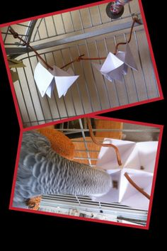 A craft for your parrot you can do with your kids! https://www.facebook.com/PamperedParrot