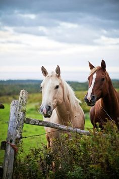 Two beautiful horses in the pasture.