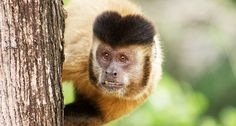 Zika virus 'spillback' into primates raises risk of future human outbreaks Los Primates, Big Sea, Zika Virus, Parts Of A Plant, Tropical Forest, Vertebrates, Brown Bear, Face Shapes, Park