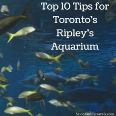 Top 10 Tips for Toronto's Ripley's Aquarium - Savvy Family Travels Aquarium Kit, Reef Aquarium, Ripleys Aquarium Toronto, Travel With Kids, Family Travel, Fish Tank Sizes, Best Aquarium Filter, Nitrogen Cycle, Travel Activities