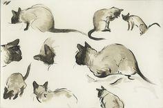 Siamese kitties