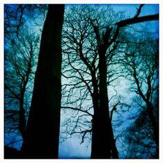 broken tree: gilly gates