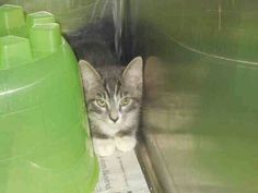 Save this baby .he will be killed tomorrow at 7pm .visit pets on deathrow on facebook Tampa.