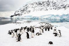 Penguin Colony, Neko Harbour