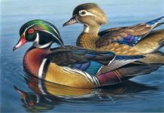 Wood Ducks 7x10, painting by artist George Lockwood