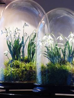 delicate  plants displayed under glass domes