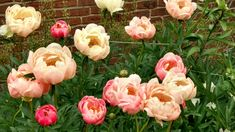 Old Westbury Gardens, Ea, Rose, Flowers, Plants, Pink, Plant, Roses, Royal Icing Flowers