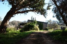 Table Mountain, Mountain Range, Cape Town, Cottages, Catering, National Parks, Nature, Plants, Chalets