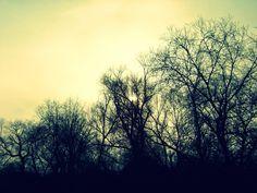 Forever Dark Woods - Polabiny, Pardubice