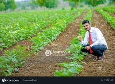 Indian agronomist at cotton field Photo Vector Icons, Vector Free, Agriculture Photos, Cotton Fields, 3d Assets, Icon Pack, Photo Illustration, Free Design, Photoshop