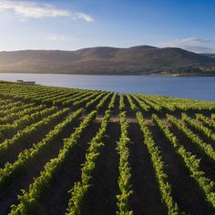Benguela Cove Lagoon Wine Estate offers exceptional experiences for everyone. Pirate Golf and Splash Pad for kids. Wine Online, Vineyard, Outdoor, Outdoors, Vineyard Vines, Outdoor Games, Outdoor Living