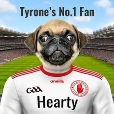 See your pet in the Tyrone GAA team county colours. Fantastic gift for a Tyrone GAA fan for any occasion. Personalised framed ceramic art. Croke Park, Picture Stand, Counter Display, English Premier League, Female Portrait, Pet Portraits, Ceramic Art, Your Pet, Pop Culture