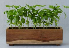 How to: Window Box on The Sill