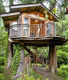 Crazy tree house!