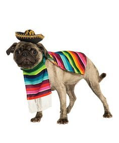 This Mexican Serape Pet Costume by Rubie's is perfect! #zulilyfinds