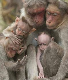 All primates have feelings. Nature Animals, Animals And Pets, Wildlife Nature, Wild Animals, Beautiful Creatures, Animals Beautiful, Cute Baby Animals, Funny Animals, Tier Fotos