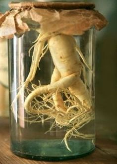 Ginseng found to relieve fatigue in cancer patients