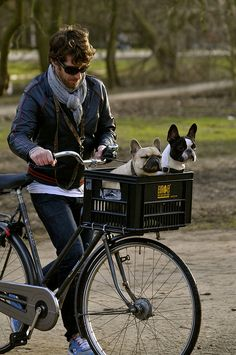 Boston Terrier and a French Bulldog.if only my two were afraid to do this. I Love Dogs, Puppy Love, Cute Dogs, Baby Dogs, Dogs And Puppies, Funny Animals, Cute Animals, Love French, French Baby