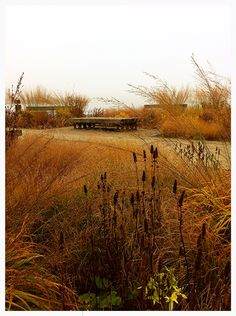 "Border of gold. Autumn in ""The four seasons park"" Sölvesborg Sweden. Design Piet Oudolf. Photo by Jens Svensson."