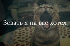 Тончайшая игра слов. Something Just Like This, Quotations, My Life, Jokes, Lol, Lettering, Humor, Cool Stuff, Animals