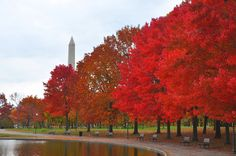 4 Ways To Celebrate The Fall In D.C.