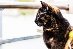 Sweet Mira | Custom Pet Photography, Zurich/ Massgeschneiderte Tierfotografie/ Tier/ Katzen/ Fotografie