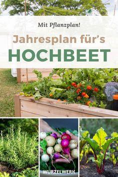 Dein PDF-Aussaatkalender für 2021 - kostenlos zum Herunterladen - Bist Du schon bereit für das Gartenjahr 2021? - Dann ist dieser Kalender genau der Richtige für Dich! Mit diesem Aussaatkalender wird dein Gartenjahr ein purer ernte Erfolg! Von der Fruchtfolge bis zur Mischkultur, habe ich in diesem Plan schon alles für Dich berücksichtigt! Plane jetzt und starte deinen eigenen Gemüsegarten oder Gemüse-Hochbeet #Aussaatkalender #Garten #Selbstversorgung #Wurzelwerk Green Life, Growing Vegetables, Garden Planning, Outdoor Living, Home And Garden, Fruit, Urban Gardening, Nature, Plants