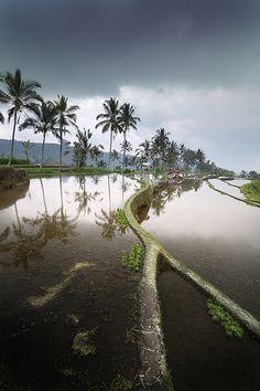 Munduk, Bali, via Flickr
