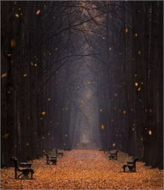 Falling Leaves, Minsk Botanical Garden, Belarus. Photo by Vlad Sokolov